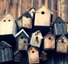 DS Smith to trial compostable bird boxes made from recycled cardboard